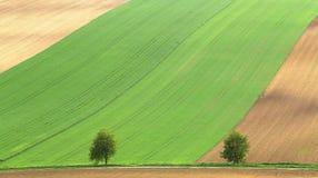 绿色和棕色农业领域 库存照片