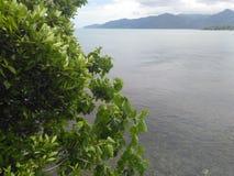 绿色和海 免版税库存照片