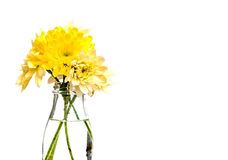 黄色和白色菊花安排 免版税库存照片