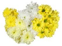 黄色和白色菊花花 免版税库存照片