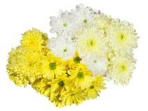 黄色和白色菊花花 库存照片