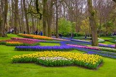黄色和白色黄水仙在Keukenhof停放,利瑟,荷兰,荷兰 免版税图库摄影