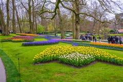 黄色和白色黄水仙在Keukenhof停放,利瑟,荷兰,荷兰 免版税库存照片