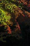 绿色和红槭叶子 免版税库存图片
