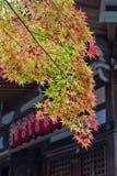黄色和红槭离开在秋天期间在京都,日本 库存图片