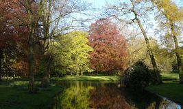绿色和红色树 免版税图库摄影
