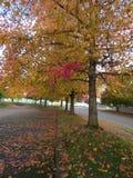 黄色和红色留下下面树和路 免版税库存图片