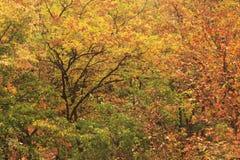 黄色和红色秋叶 免版税库存图片