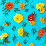黄色和红色花的花纹花样与叶子的在蓝色背景 平的位置,顶视图 背景细部图花卉向量 库存图片