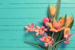 黄色和红色郁金香在绿松石被绘的木计划开花 库存图片