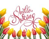 黄色和红色郁金香框架在白色背景和文本你好春天的 书法字法 库存图片