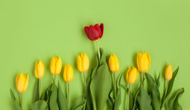 黄色和红色郁金香从上面 免版税库存照片