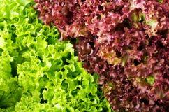 绿色和红色莴苣沙拉, backround的Lollo Rosso, 库存照片