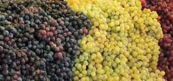 绿色和红葡萄 免版税库存图片