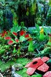 绿色和红颜色的猪笼草植物 免版税库存照片