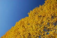 黄色和蓝色对角线 库存图片