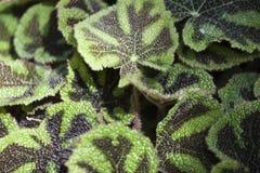 绿色和黑叶子 免版税库存照片