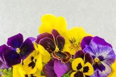 黄色和紫罗兰色花 免版税库存图片