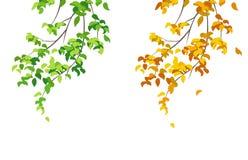 绿色和黄色分支 免版税库存图片