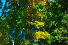绿色和黄色叶子 库存图片