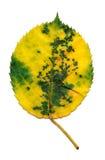 黄色和绿色叶子 图库摄影