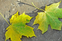 黄色和绿色叶子 库存照片