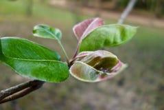绿色和紫色宏指令上色了叶子 免版税库存照片