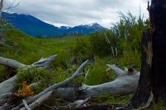 黄色和绿色山风景 免版税图库摄影