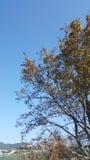 黄色和绿色树在秋天 免版税库存图片