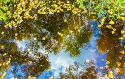 黄色和绿色树在水坑离开与秋天蓝天的反射与云彩 免版税库存图片