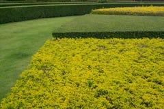 黄色和绿色树篱 库存照片