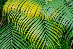绿色和黄色棕榈叶背景  免版税库存照片