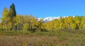 黄色和绿色白杨木和积雪的山全景高山风景在叶子季节期间 库存照片