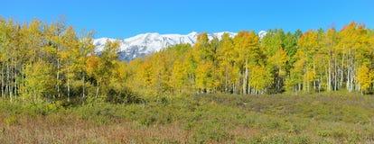 黄色和绿色白杨木和积雪的山高山风景全景在叶子季节期间 免版税图库摄影