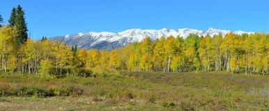 黄色和绿色白杨木和积雪的山高山风景的全景在叶子季节期间 免版税库存照片