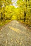 黄色和绿色秋天叶子带领入距离围拢的土火路在一个密集的森林里 库存图片