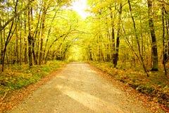 黄色和绿色秋天叶子带领入距离围拢的土火路在一个密集的森林里 免版税库存图片