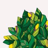 绿色和黄色花卉乱画背景 免版税库存图片