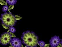 紫色和绿色花和藤在黑背景 免版税库存照片