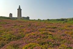 紫色和黄色花的五颜六色的领域与灯塔的在背景中 Frehel海角  britte 免版税图库摄影