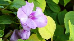 紫色和绿色花 库存图片