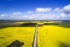 绿色和黄色领域拉脱维亚春天 免版税库存照片