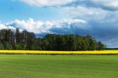 绿色和黄色领域拉脱维亚春天 库存照片