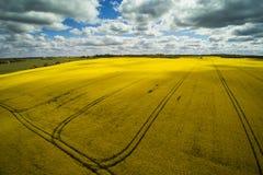 绿色和黄色领域拉脱维亚春天 库存图片