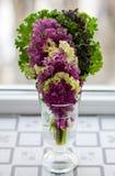 紫色和绿色莴苣美丽的维生素 免版税库存照片
