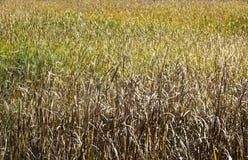 黄色和绿色 免版税库存照片