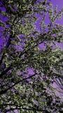 紫色和绿色 库存照片