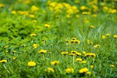 黄色和绿色 免版税库存图片