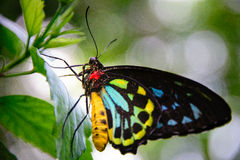 黄色和黑蝴蝶 库存照片