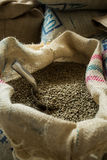 绿色咖啡豆 免版税库存图片